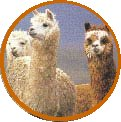UKabc Noticeboard, Latest Updates [Alpacas watching out]