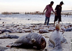 Malaysian fisherfolk examining beached fish after the first tsunami wave